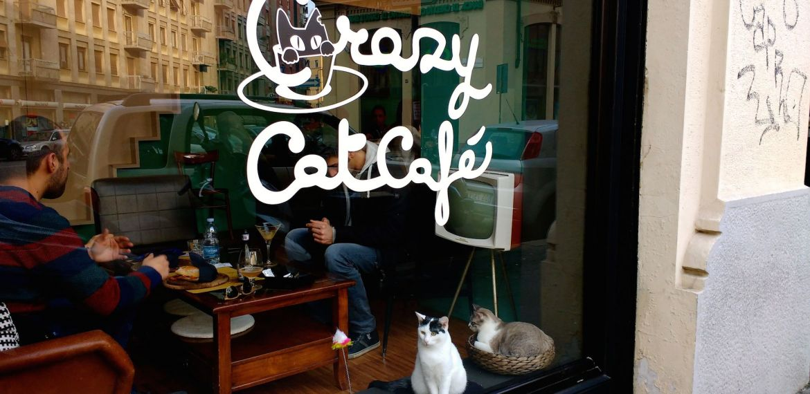 Felines & frappés: This Milan café is the cat's meow